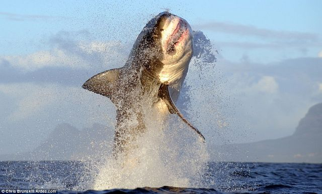 Waarom zou je vissen op voorntjes